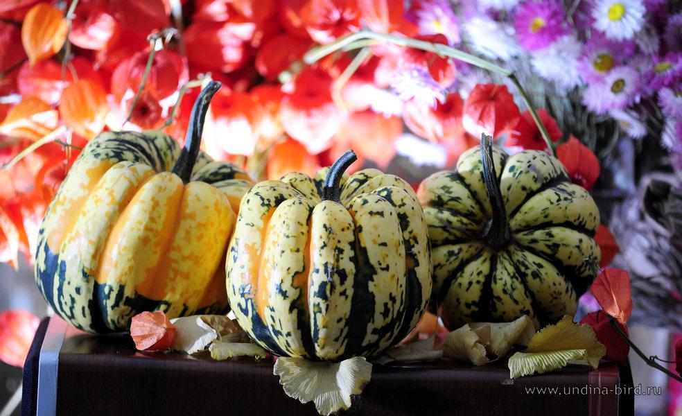 Пакетики семян фото