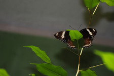 Лунная бабочка