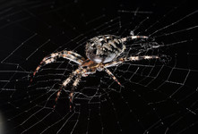 Портретище Паучка <br />A Large Portrait Of The Spider-friend