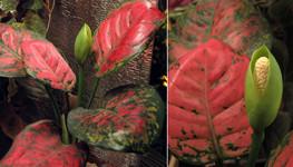 Листики и их колосок  | Leaves and Their Spike