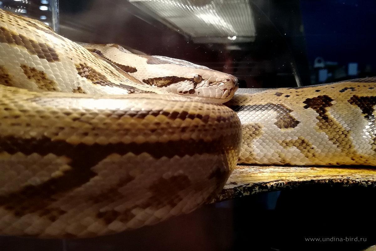Просто змей