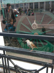 Птичка в большом городе